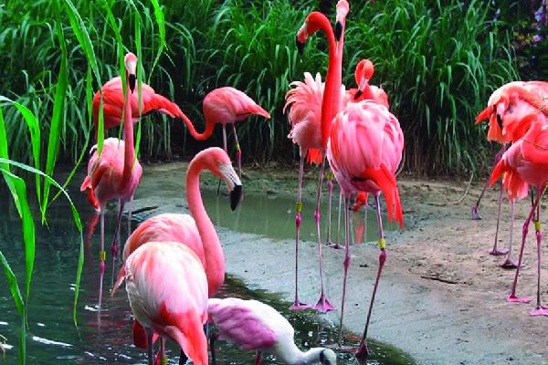 Zoológico de Barranquilla